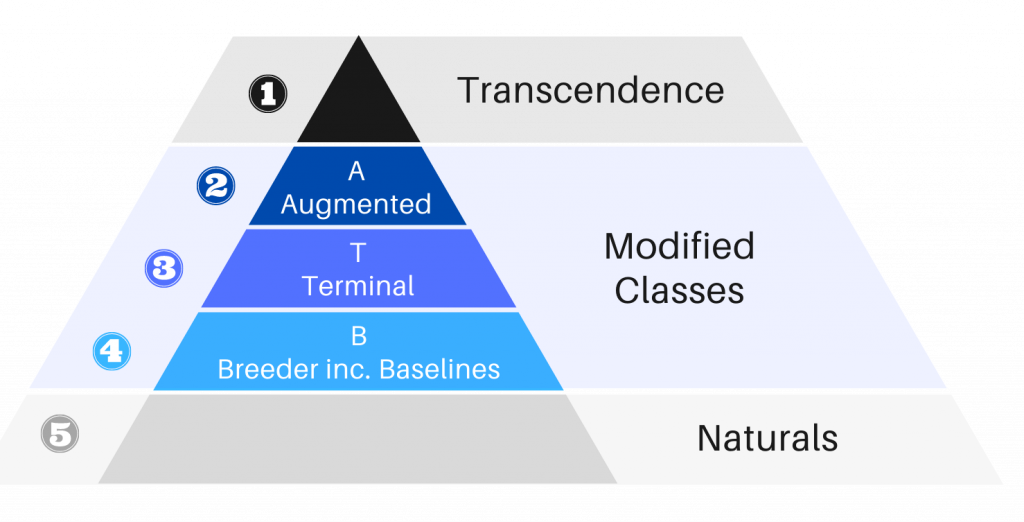 Modified Hierarchy v1